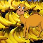 Η καμήλα και οι μπανάνες